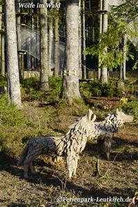 Centerparc Allgäu Ferienpark Leutkirch Wolf im Wald